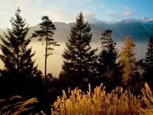 Montañas vistas desde el bosque