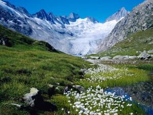 Primavera en el glaciar