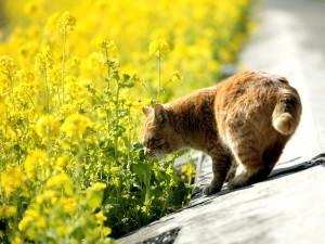 Un gato oliendo las flores