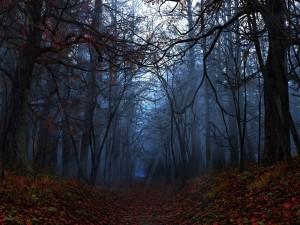 Hojas de otoño iluminadas por los rayos del sol