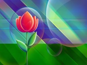 Burbujas y un tulipán rojo
