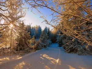 Árboles cubiertos de nieve a orillas del camino