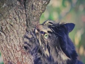 Gato afilando sus garras en un árbol