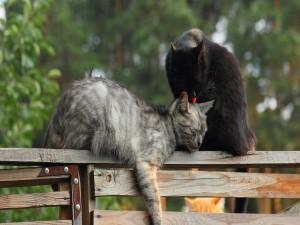 Dos gatos en una cerca