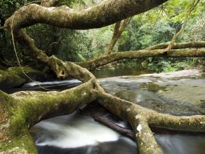 Un gran árbol en el cauce del río