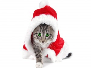 Un gato vestido de Papá Noel