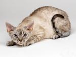 Un gato observando fijamente