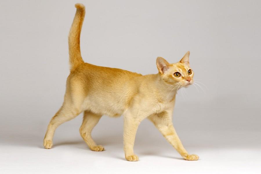 Un gato caminando