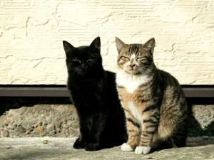 Dos gatos callejeros dormitando