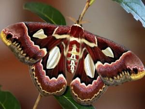 Impresionante mariposa sobre una ramita
