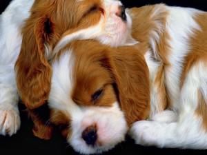 Hermosos cachorros durmiendo