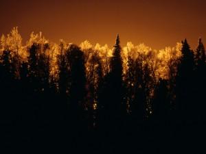 Sol iluminando la copa de los árboles