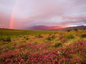 Flores rosas en el campo