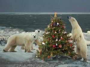 Osos polares junto a un árbol de Navidad