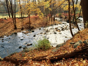 Un río fluyendo en otoño