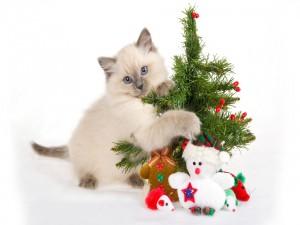 Gatito junto a un árbol de Navidad