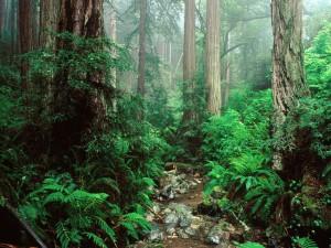 Frondoso bosque