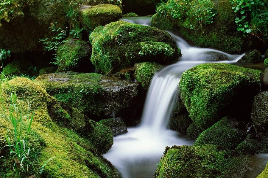 Agua fluyendo sobre unas rocas cubiertas de musgo
