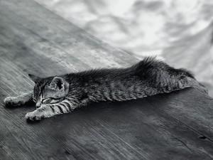 Gato dormido sobre una mesa de madera