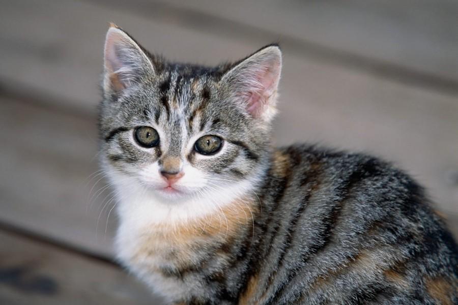 Un lindo gatito atigrado