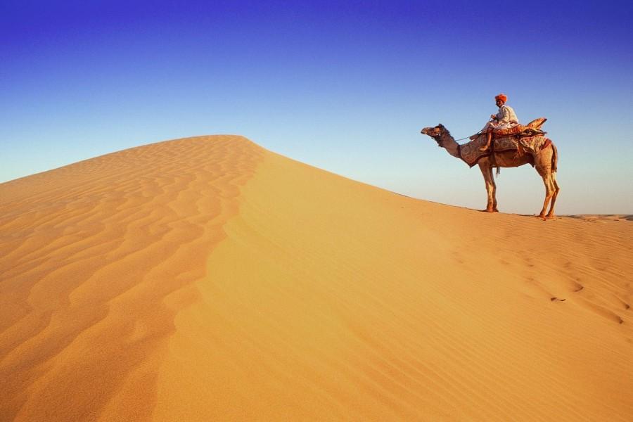 Un camello en el desierto