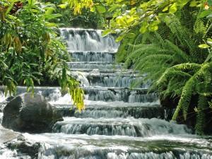 Vegetación junto a la cascada