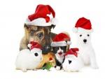 Animales festejando la Navidad