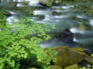 Árboles y piedras junto al cauce del río