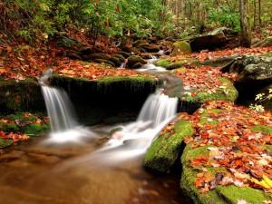 Hojas otoñales sobre las rocas del río