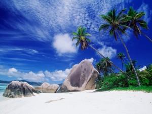 Rocas y palmeras en la playa