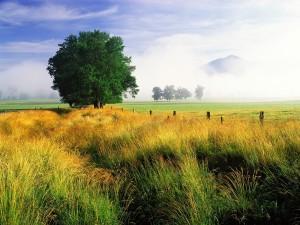 Un bonito campo
