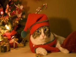 Un gato festejando la Navidad