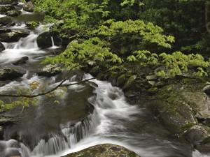 Las ramas de unos árboles sobre el río