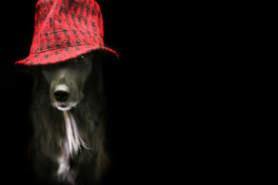 Un perro con sombrero rojo