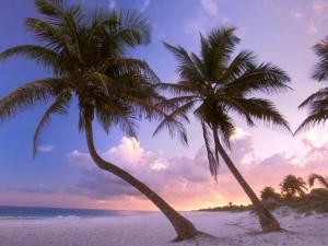 Amanece entre palmeras