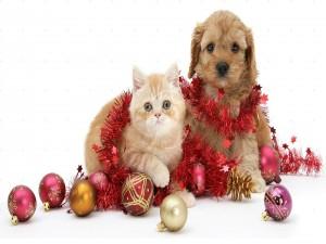Perro y gato festejando la Navidad