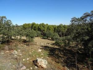 Parque forestal La Atalaya (Ciudad Real)