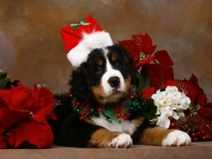 Un perro navideño