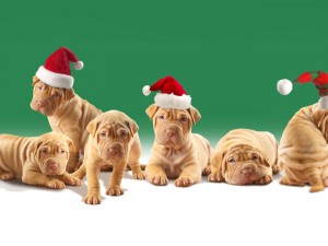 Cachorros con el gorro de Santa