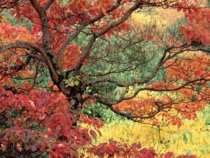 Otoño en los árboles