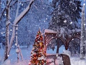 Árbol de Navidad iluminado en un jardín cubierto de nieve