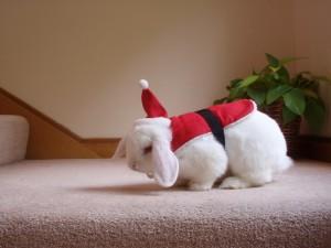 Blanco conejito con una divertida capa de Papá Noel