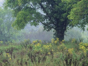 Plantas y árboles en el bosque