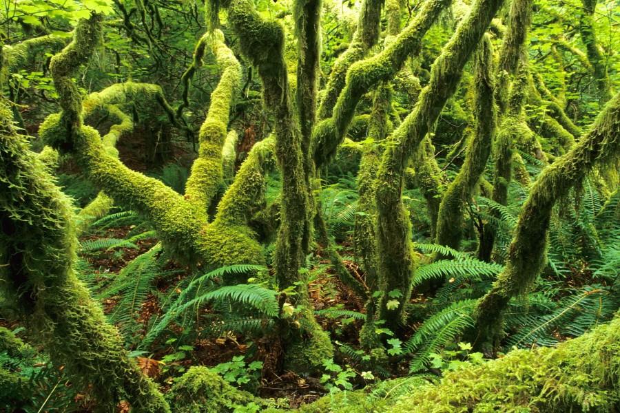 Un bosque cubierto de vegetación