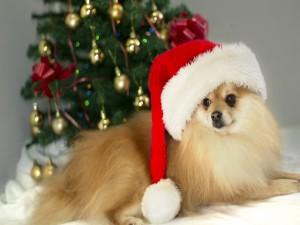 Un bonito perro junto al árbol de Navidad