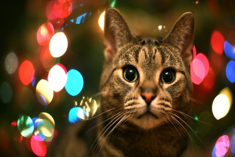 Luces navideñas tras el gato