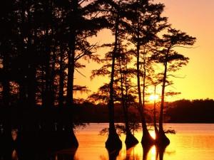 Sol en el lago Reelfoot (Tennessee)
