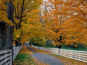 Carretera cubierta de hojas otoñales