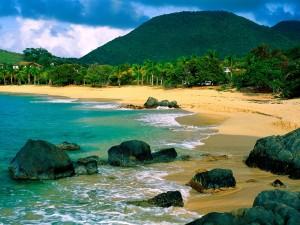 Palmeras verdes en la playa