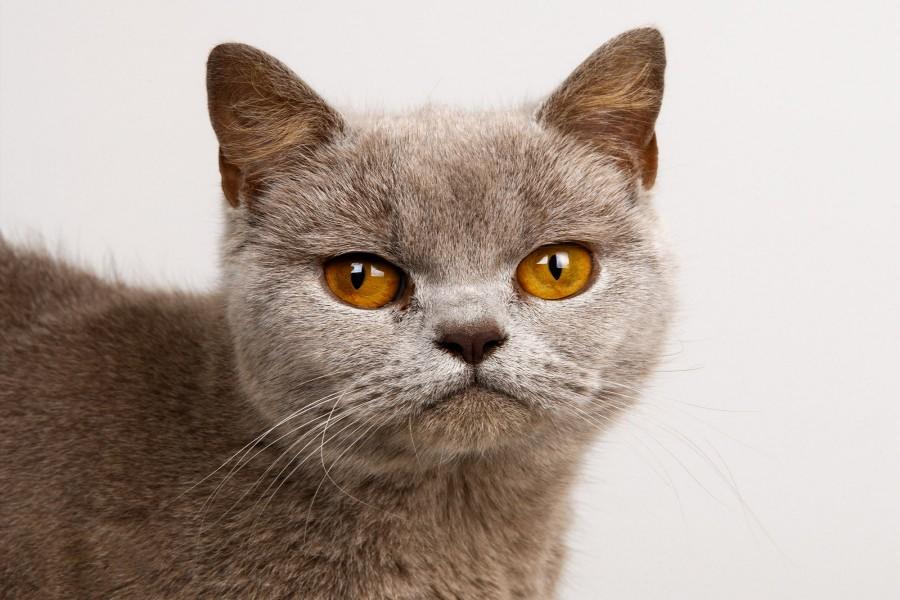 Un gato muy serio